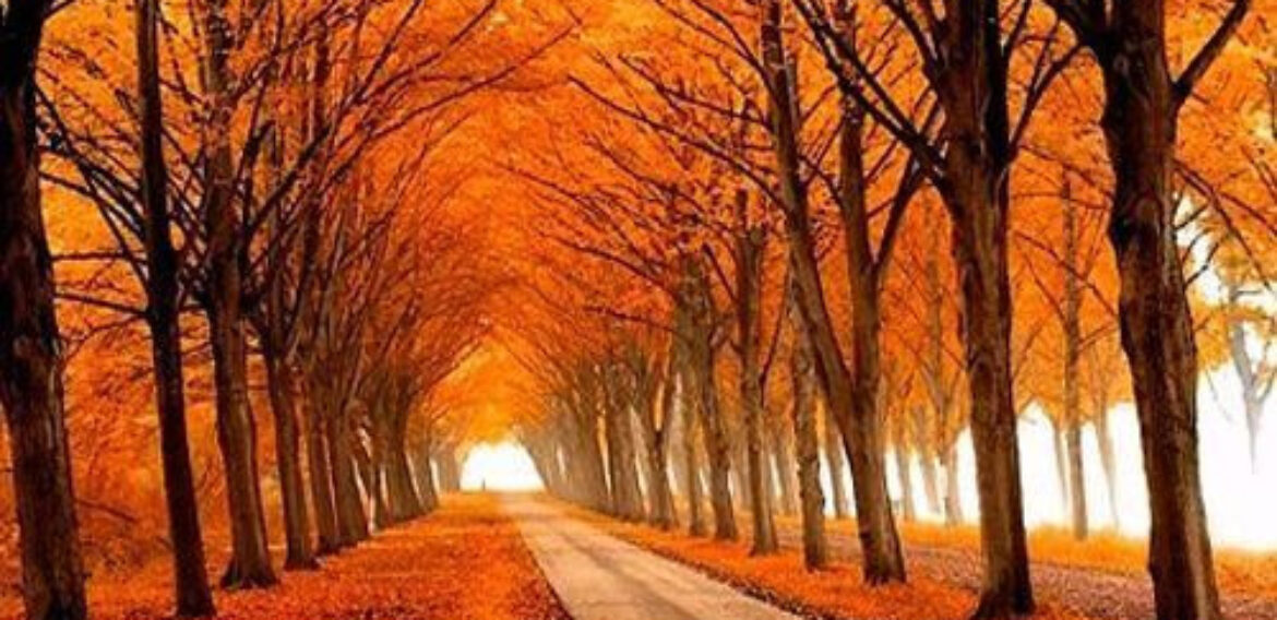 There are some reasons to hate Dutch autumn, but more reasons to love it!